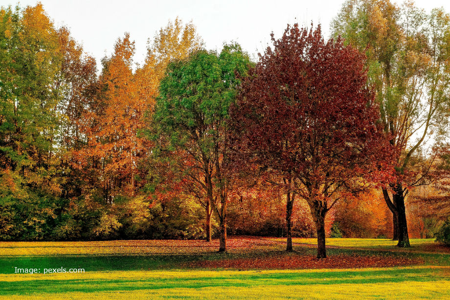 Trees in autumnal colours