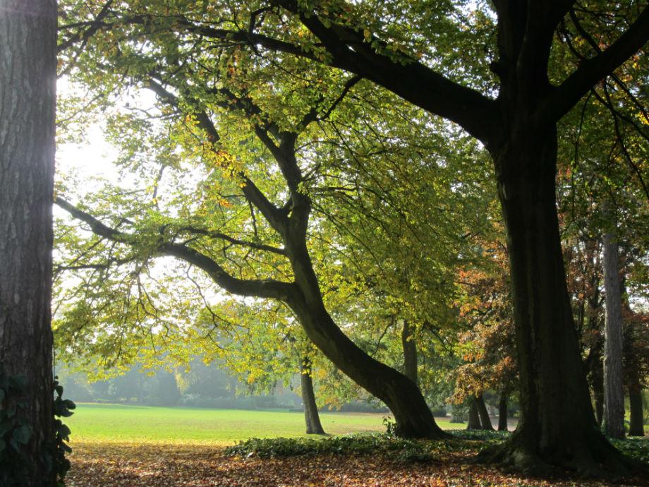 Autumnal West Park